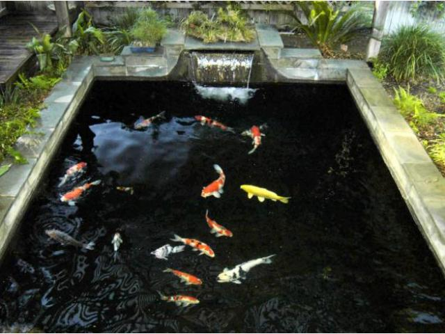 Water dynamix design construction repair and for Koi pond construction plans