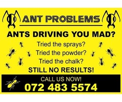 Ant Problems? Pest Control