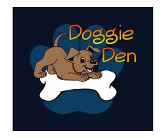 Daycare for DOGS