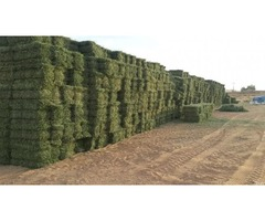 Small square bales lucerne