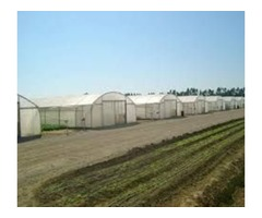 Agricultural Tunnels in Eastern Cape, Agriculture Tunnels, 0647092050greenhouse tunnels South Africa